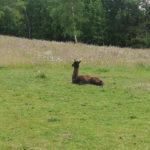 Zwierzęta - one wiedzą jak szanować naturę :)